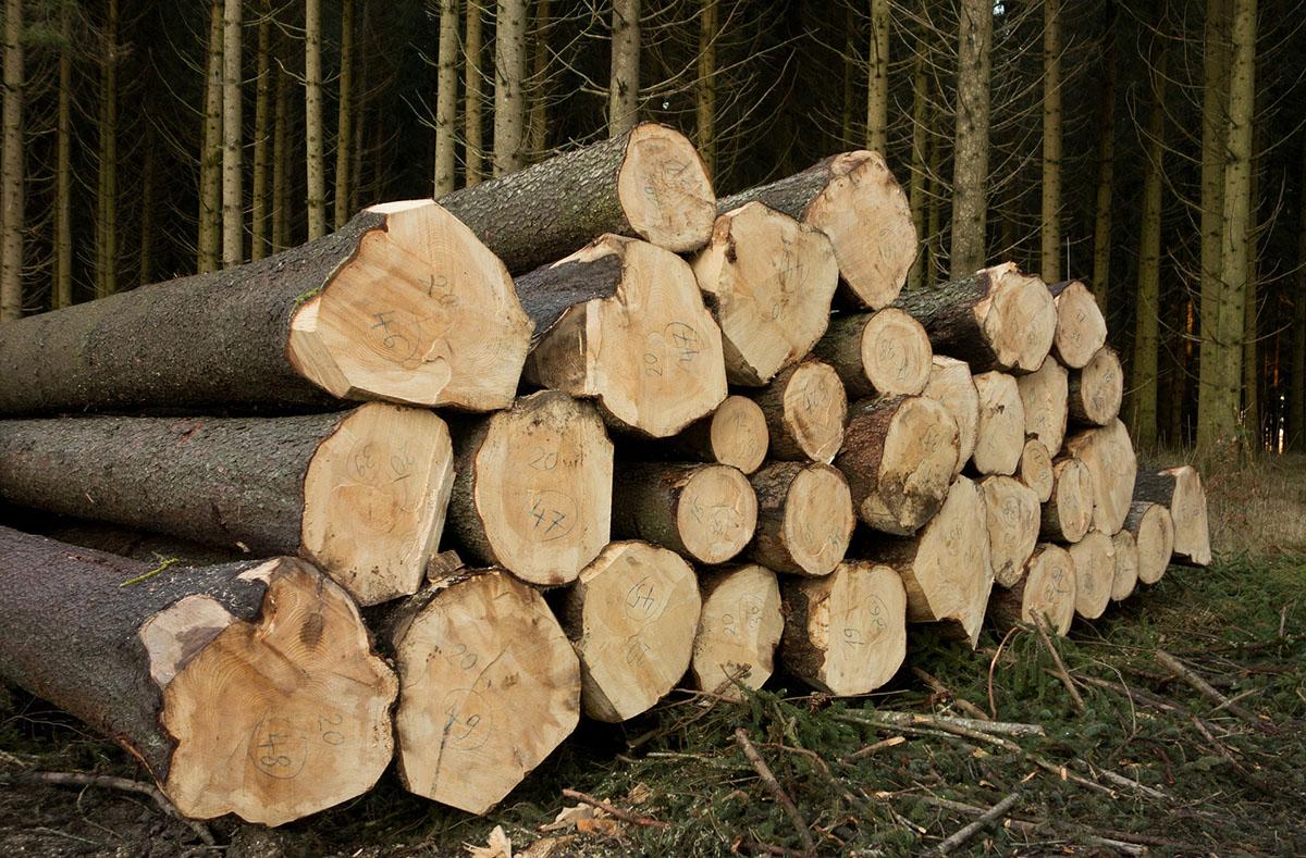 Una tipologiadi albero da ardere