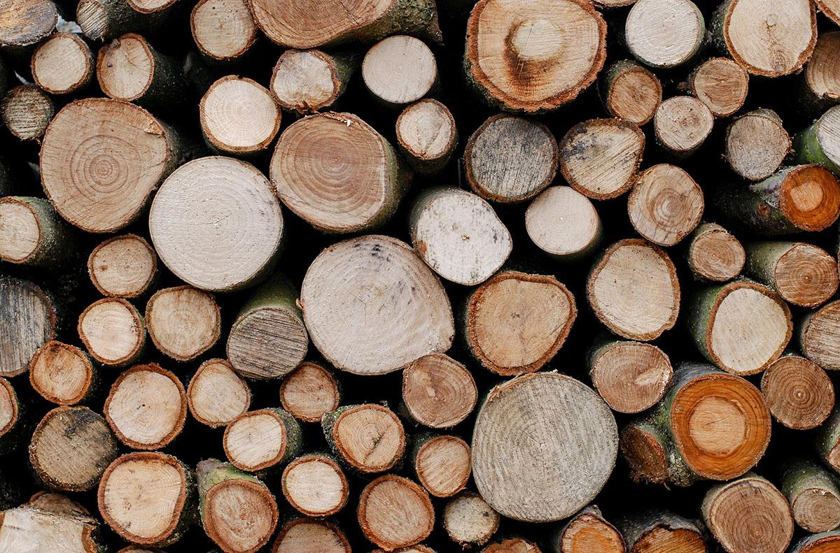 Un'altra tipologia di albero da ardere