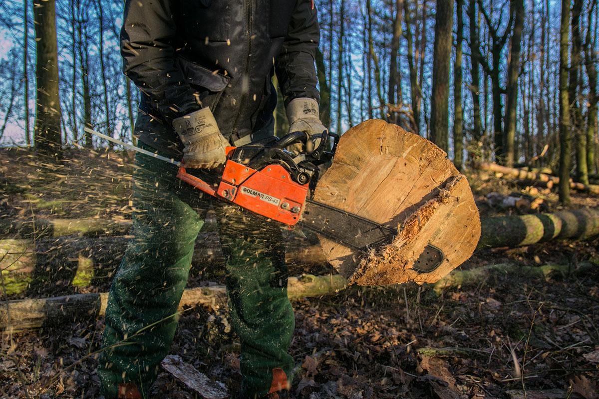 Il taglio degli alberi nel bosco